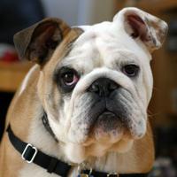 topsaltydog