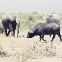 Mkora Mzee